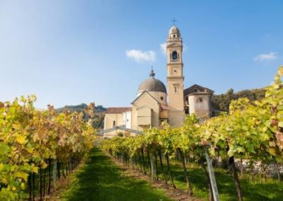 Wine & Food Tasting Experience in Italy
